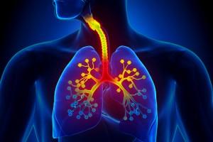 IL-13 ve IL-1β Akciğer Fibroblast Büyümesini Arttırıyor