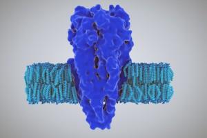T hücreleri Enfeksiyon Durumunda Asetilkolin Üretiyor