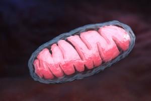 MS'te Çözüm Nöronlardaki Mitokondrilerde Mi?