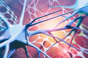 Beyin Hücrelerini Tekrar Gençleştirmek Mümkün Mü?