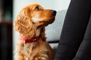 Köpek Sahibi Olmak Şizofreni Riskini Azaltıyor