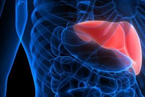 İnsan Karaciğeri Tamir Edilerek Bir Hafta Boyunca Hayatta Tutulabilir Mi?