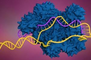 Genomda CRISPR – Cas9 Taraması