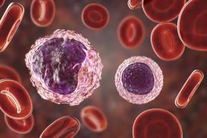Araştırmacılar MS Patofizyolojisinde B Hücrelerinin Rolünü Açıkladı