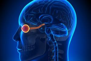 Nöromiyelitis Optika Spektrum Bozukluğu Hastalarında İmmünoglobulinler, Kan-Beyin Bariyeri Geçirgenliğini Değiştirebilir Mi?