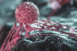 COVID-19 Hastalığında Doğal Öldürücü Hücre Aktivasyonu Nasıl Oluyor?