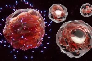 TCR`lerin Sayısı ve Klonalitesinin Kolorektal Kanseri Prognozu Ile Ilişkisi