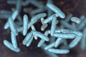 Melanom Hastalarında Bağışıklık Kontrol Noktası İnhibitörü Yanıtı için Öngörücü Biyobelirteçler