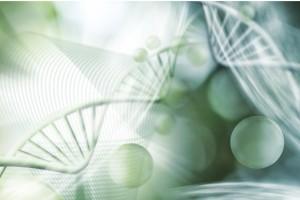 İnsan Genomu Haritasını Oluşturma Yarışı