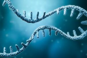 Hepatosellüler Karsinom Hastalarında RNA Bağlayıcı Motif Protein 25 Ekspresyonu