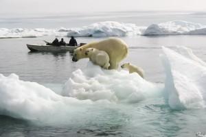Küresel Isınma Hayvanların Şekil Değiştirmesine Neden Olmaktadır